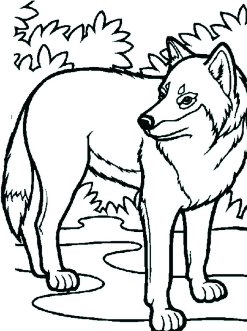 Planse De Colorat Cu Animale Salbatice Desene Pentru Copii