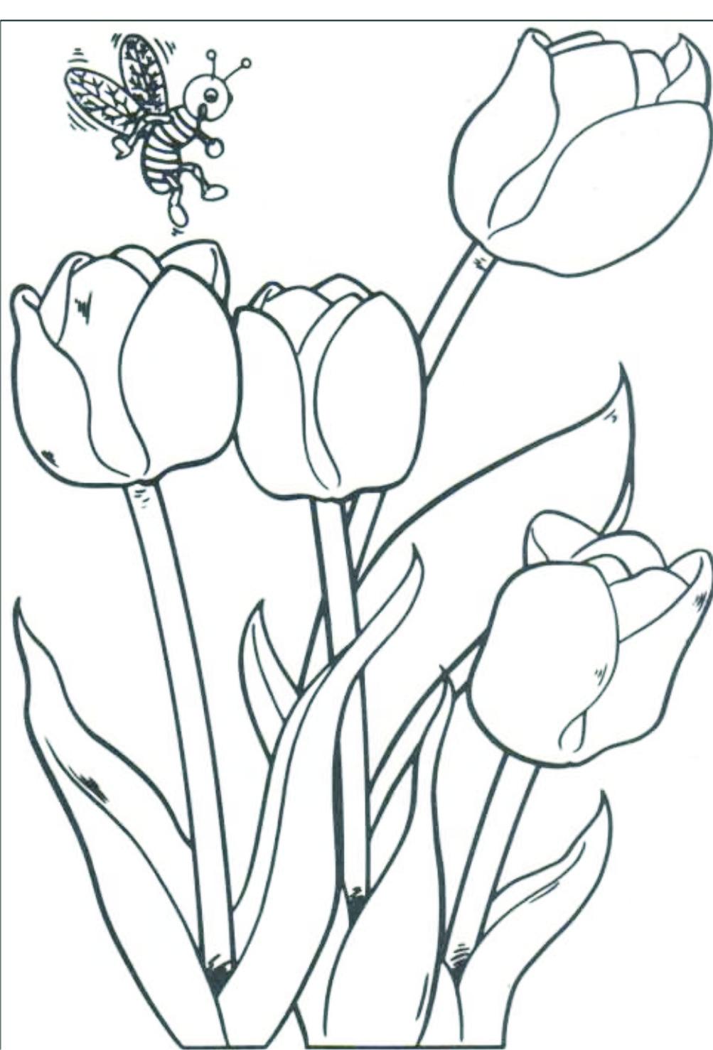 Planse De Colorat Cu Albine     Desene Cu Albinute Si Viespii De