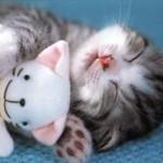 pisicute dormind