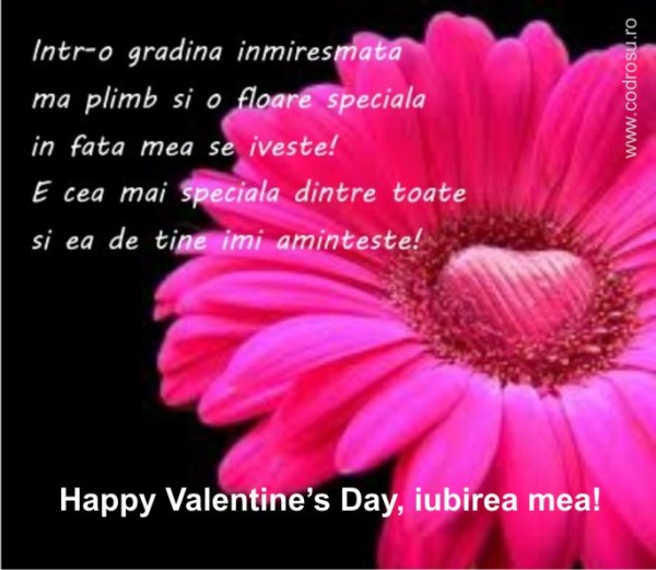 felicitari de sf valentin_poze_06