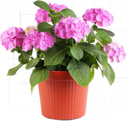 4_flower
